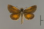 124123 Ancyloxypha numitor d IN