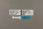 124125 Chlosyne gorgone carlota labels IN