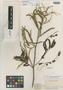 Mimosa schomburgkii Benth., BRITISH GUIANA [Guyana], R. H. Schomburgk 715, Isotype, F
