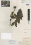 Pithecellobium lasiopus Benth., BRITISH GUIANA [Guyana], R. H. Schomburgk 487, Isotype, F