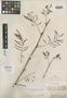 Schrankia brachycarpa Benth., BRITISH GUIANA [Guyana], Schomburgk 903, Isotype, F