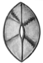 104443: Ceremonial dance arm shield