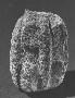 48654: stone armadillo figure