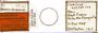 28926 Bizarrifrons quasisymmetricus HT PT slide IN