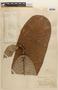 Couepia macrophylla image