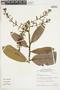 Hirtella glandulosa image