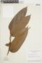 Hirtella guainiae Spruce ex Hook. f., BRAZIL, F