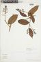 Hirtella macrophylla image