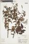 Hirtella racemosa image