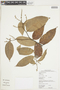 Licania coriacea Benth., GUYANA, F