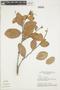 Licania coriacea Benth., BRAZIL, F