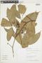 Licania guianensis image