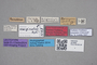 2818956 Tachinus koreanus LT labels IN