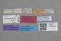 2818958 Tachinus reitteri LT labels IN