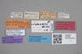 2818963 Tachinus subparallelus HT labels IN