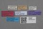 2818966 Mycetoporus pustulatus ST labels IN