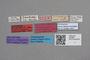 2818967 Mycetoporus macrocephalus LT labels IN