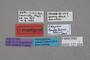 127054 Edaphus longepilosus HT labels IN