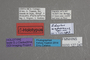 127047 Edaphus wagnerianus HT labels IN