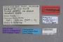 127048 Edaphus dybasianus HT labels IN