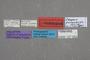 127053 Edaphus panamensis HT labels IN