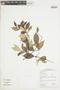 Licania leptostachya Benth., GUYANA, F