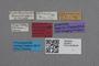 2818970 Gyrophaena alexandrovi ST labels IN