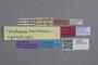2818972 Gyrophaena puncticollis Bernhauer HT labels IN