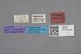 2818977 Stenus abbreviatipennis ST labels IN