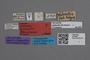 2818980 Atheta globicollis LT labels IN