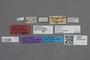 2818984 Dasyglossa fenyesi LT labels IN