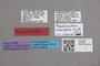 2818988 Paulianidia ivonhibensis HT labels IN