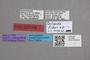 2818989 Paulianidia fisheri HT labels IN