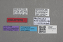 2818990 Paulianidia reticulata HT labels IN
