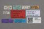 2818994 Xantholinus crateris LT labels IN
