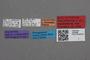 2818999 Philonthus loxodonta HT labels IN