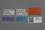 2819000 Philonthus platalea HT labels IN