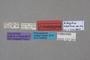 127051 Edaphus newtoni HT labels IN