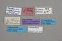 127079 Megalopinus simpliciventris HT labels IN