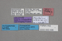 63496 Megalopinus wardi HT labels IN