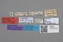 2819013 Mycetoporus rosti LT labels IN
