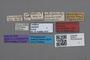 2819014 Bolitobius luzei HT labels IN