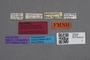 2819020 Leptochirus pachoensis HT labels IN