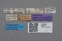2819027 Pseudophilonthus atricollis ST labels IN