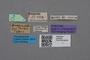 2819030 Philonthus flavoscutellatus ST labels IN