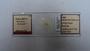 29915 Fahrenholzia fairchildi PT slide IN