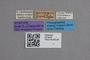 2819039 Stenus parvipennis ST labels IN