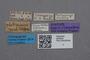 2819044 Bledius philippinus ST labels IN