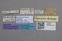2819050 Belonuchus diversus ST labels IN