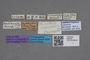 2819052 Philonthus rudiventris HT labels IN